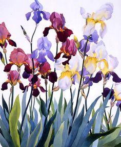 Christopher Ryland SBA (b.1951) — Irises  (654x800)