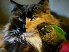 Gorgeous Calico Cat and her Bird Friend.