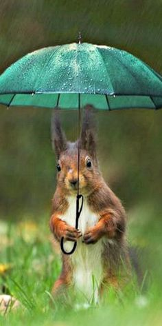 Du kleiner süßer Wicht machst es genau richtig, den Regenschirm immer dabei haben. ☔