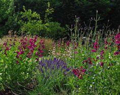 Design Tips | Lisa Cox Garden Designs Blog