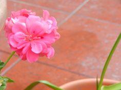 malvon+:+linda+flores+|+ahorayya2