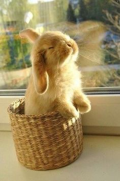 24 Cutest Animal Pictures Guaranteed to Make You Smile Today - JustViral. Cute Bunny Pictures, Baby Animals Pictures, Cute Animal Videos, Cute Animal Pictures, Baby Pictures, The Animals, Cute Wild Animals, Fluffy Animals, Cute Funny Animals