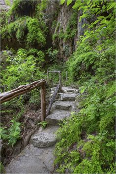 The Texas Hill Country has much to offer. Westcave Preserve is a great example of this. Just past Hamilton Pool only 27 miles from downtown Austin, this lush hidden gem turns green in the spring with ferns and cypress. The steps in this Westcave Preserve image lead up to an outlook that rests behind the 40 foot waterfall (more of a trickle on most occassions). Still, it is cool and green - a nice break on a hot Texas summer day.
