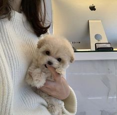Super Cute Puppies, Cute Baby Dogs, Cute Little Puppies, Cute Dogs And Puppies, Cute Little Animals, Cute Funny Animals, Doggies, Adorable Puppies, Beige Outfit