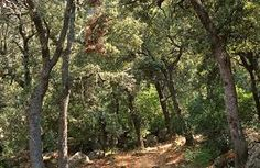 Bosque mediterráneo (Encinar) 3