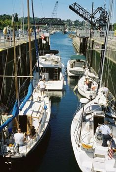 The Seattle Locks in Ballard.  Always fun to picnic and wonder where all the boats are going.