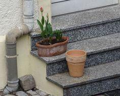 Der Blumentopf. Die Blumentöpfe.  Zwei Blumentöpfe auf einer Steintreppe. Im oberen Blumentopf sind Tulpen.