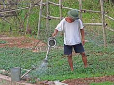 Gardening by Marco Sarli www.emporiumhanoi.com #Hanoi #Vietnam #photo #photography #holiday #travel