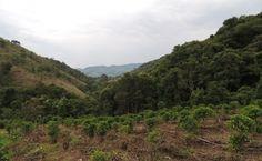 café nas montanhas