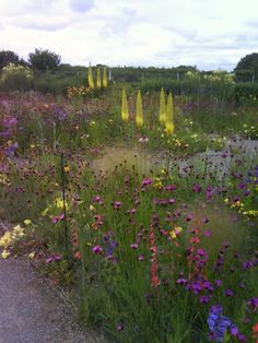 Knibb: The Psychedelic Gardens of James Hitchmough