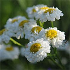 Gardener's Supply -- Plant a garden with bouquets in mind. Uses the square foot gardening concept.