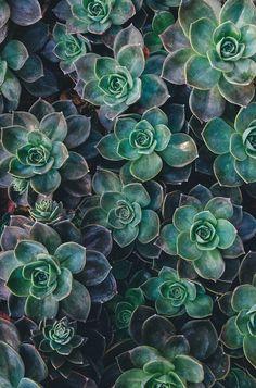 succulentes / plante grasse / home design / garden / green / decoration Succulent Landscaping, Planting Succulents, Planting Flowers, Succulent Plants, Indoor Succulents, Propagate Succulents, Indoor Plants, Rare Succulents, Potted Plants
