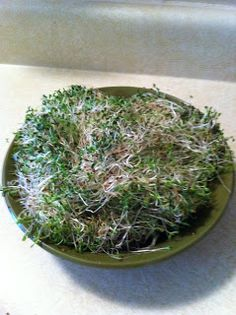 Just Me...: Growing Alfalfa Sprouts