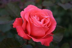 Flowers | Vintage Belle Broken China Jewelry Blog