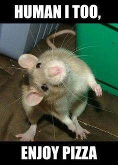 Rat Meme