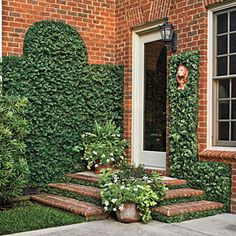 Low-Cost Charm: Creeping Fig. This entire wall/steps area only cost $5.00 to landscape!