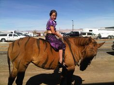 4-H Horse Costume Class Ideas | Discuss Costume Class! :) at the Equestrian Events, Shows ...