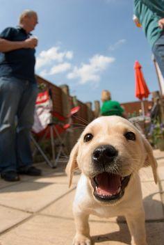 Happy little guy! lenny by littlesthobo on Flickr