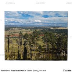 Ponderosa Pine from Devils Tower Puzzle