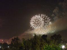 IMG_2821 New Years Eve, Nye, Fireworks, Dandelion, Explore, Flowers, Plants, Dandelions, Florals