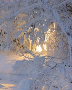 lights, winter snow, winter wonderland, white, trees, beauty, winterwonderland, narnia, sun