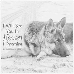 The German Shepherd What do you think about this beautiful photo? Please make a commnet below. {Say thanks to|Give thanks to|Appreciate} you! If so, you should at: https://usagiftsshop.com Dog Heaven Quotes, Dog Grief, Pet Loss Grief, Loss Grief Quotes, Dog Loss Quotes, Cute Dog Photos, Funny Dog Pictures, German Shepherd Puppies, Funny German Shepherds