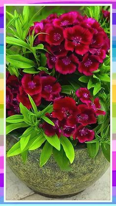 Container Flowers, Container Plants, Container Gardening, Exotic Flowers, Beautiful Flowers, Flower Vases, Flower Arrangements, Free Happy Birthday Cards, Front Porch Flowers