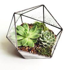 Малютка икосаэдрик с суккулентами и мхом #V2florarium #икосаэдр #суккуленты #флорариум #флорариумназаказ #флорариумспб #флорариумручноиработы #мох #тигровыйглаз #террариум #florarium #terrarium #succulents #icosohedron