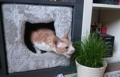 Lazy cat: My cornish rex cat Ninja eating cat gras without leaving her warm place http://ift.tt/2gsd5iU