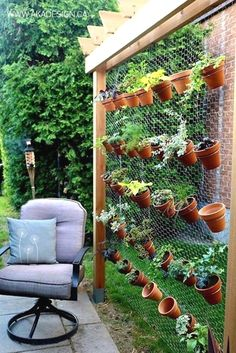 Chicken wire is too flimsy to hold these up, but the idea is not bad. A stronger metal grid would work.  #GardeningTips