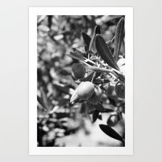 Olives Art Print by Plasmodi - $18.00 Olives, Art Prints, Plants, Art Impressions, Plant, Planets