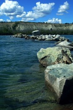 Beautiful Yukon River on a glorious sunny day in Whitehorse, Yukon, CANADA. Amazing Places, Beautiful Places, Yukon River, Yukon Canada, Alaska Highway, Yukon Territory, Canada Travel, Natural History, The Good Place