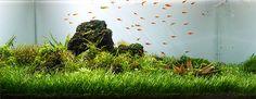 The 10 Best Freshwater Aquarium Plants for Beginners