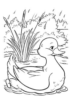 Nice drawing of a duck wading in a pool, to color - Nice drawing of a duck wading in a pool, to color - Bunny Coloring Pages, Spring Coloring Pages, Colouring Pages, Adult Coloring Pages, Coloring Books, Art Drawings For Kids, Bird Drawings, Easy Drawings, Fall Tree Painting