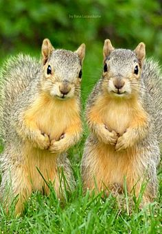 Just hand over the nuts and no one gets hurt... ❊