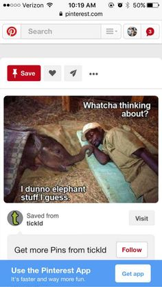 Post with 464 views. Pinterest App, Binder, More Fun, Life Hacks, Workshop, Elephant, Organization, Pictures, Sailing