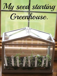My little seed starting greenhouse. - Momcrieff