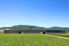 dominus estate vineyard : napa valley : architecture : herzog & de meuron