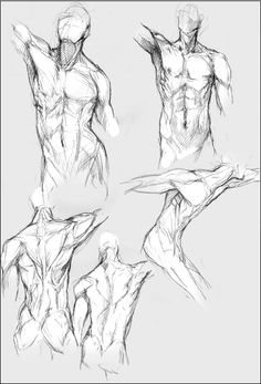 anatomy.sketches by *nheira on deviantART
