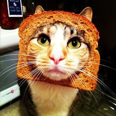 Bread with cat