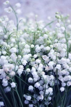 Lily of the valley. A clean, bright white floral often used in parfumarie.