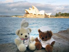 Bechamel Bear and his ozzy friend in Sydney