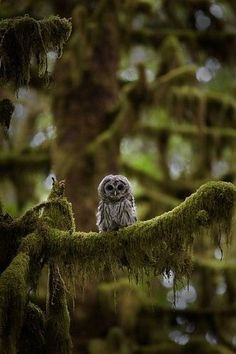 I want to curl up with this cute little owl in a bed of cozy moss