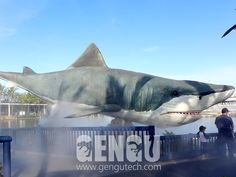 White Shark( Dinosaurs, Dinosaur Costumes, Dinosaur Rides, Fiberglass Dinosaurs, Dinosaur Skeletons And Fossils Supplier Shark, Fighter Jets, Aircraft, Animals, Animales, Aviation, Animaux, Sharks, Animal