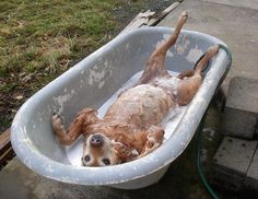 Diy dog bath: You'll have an easier time giving your dog a bath if you use a ToWEL. Just put a folded towel in the bottom of your sink or tub, before you plop you pet inside. Experts say the textured towel will cushion their feet, and keep them from slipping on the wet surface...It'll also give your pet something to dig their nails into, helping them release tension and stress.