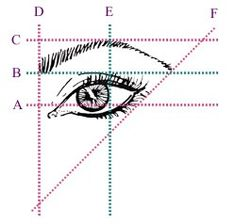 Eyebrow dimensions: drives me NUTS when line D is too close to line E.