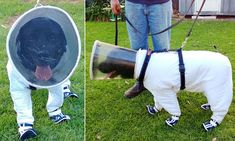 Bazz the beekeeping dog wears a special suit to protect it from stings