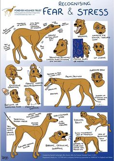 Training your puppy is about building your relationship with your pet dog and establishing boundaries. Be firm but consistent and you will see impressive results when it comes to your dog training work. Dog Training Methods, Basic Dog Training, Potty Training, Training Schedule, Training Pads, Class Schedule, Toilet Training, Crate Training, Training Collar
