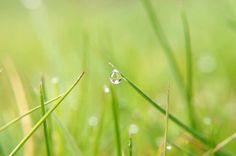 water drop on grass