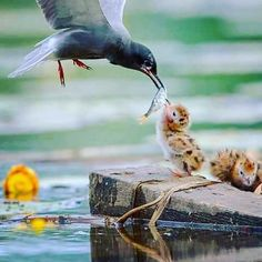 The way cats and dogs eat is related to their animal behavior and their different domestication process. Pretty Birds, Love Birds, Beautiful Birds, Animals Beautiful, Nature Animals, Animals And Pets, Cute Baby Animals, Funny Animals, Photo Animaliere